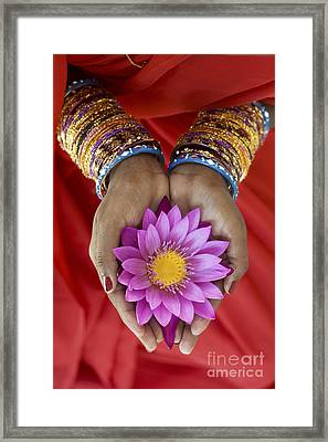 Lotus Offering Framed Print by Tim Gainey