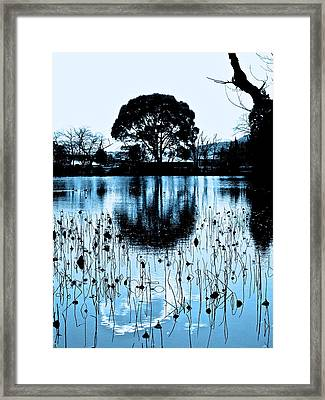 Lotus Pond Winter - 4 Framed Print by Larry Knipfing
