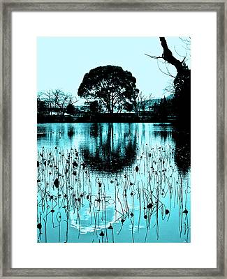 Lotus Pond - Winter Framed Print by Larry Knipfing