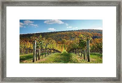 Loudon County Vineyard I Framed Print by Steven Ainsworth
