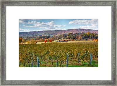 Loudon County Vineyard II Framed Print by Steven Ainsworth