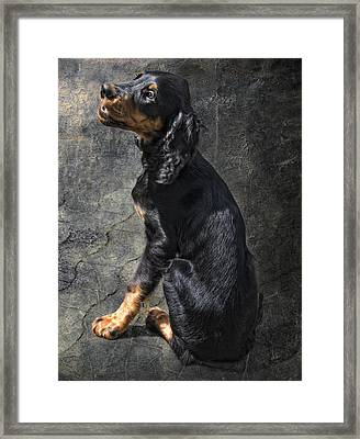Louis Framed Print by Joachim G Pinkawa