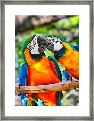 Love Bites - Parrots In Silver Springs Framed Print by Christine Till