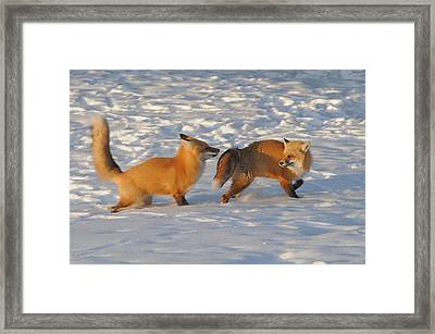 Love In The Snow Framed Print by Sandra Updyke