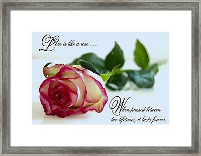 Love Is Like A Rose . . . Framed Print by Daniel Hagerman