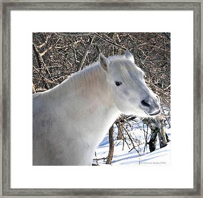 Love Is...paso Fino Stallion Smiles  Framed Print by Patricia Keller