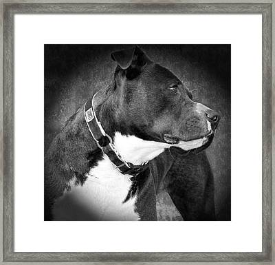 Love Me Framed Print by Camille Lopez