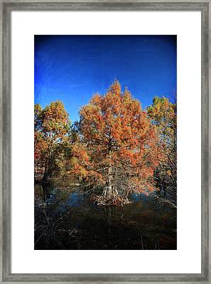 Love Me Longer Framed Print by Laurie Search