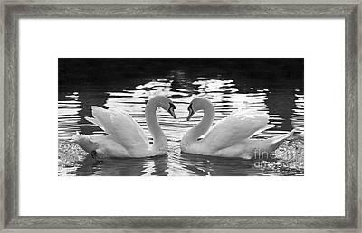 Love Swans Framed Print by Brandon Alms