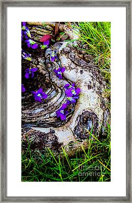 Love Tinted Glasses Framed Print by Charlie Cliques