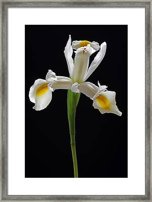 Love Your Curves And All Your Edges Framed Print by Juergen Roth