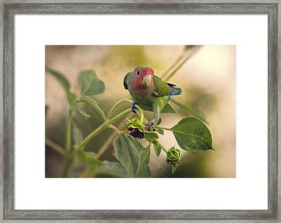Lovebird On  Sunflower Branch  Framed Print by Saija  Lehtonen