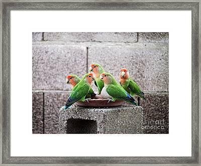 Lovebirds Framed Print by Rhea Winscom