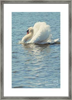Lovely Bird Framed Print by Svetlana Sewell