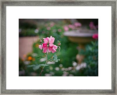 Lovely In Pink Framed Print by Linda Unger