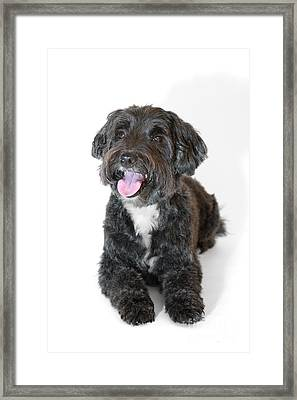 Lovely Long Haired Dog Framed Print by Natalie Kinnear