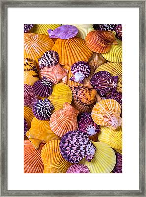 Lovely Sea Shells Framed Print by Garry Gay
