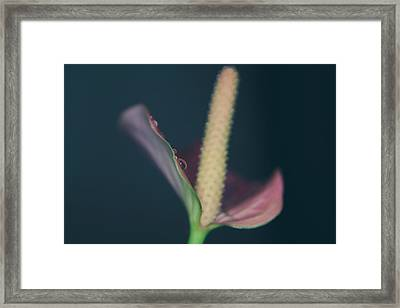 Lovely Things Framed Print by Laurie Search