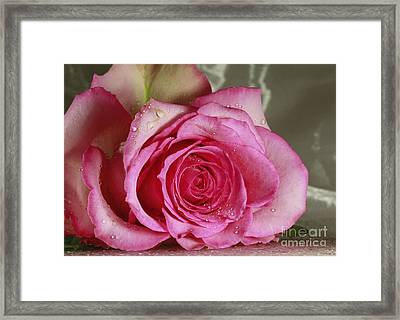 Loves Tender Moments Framed Print by Inspired Nature Photography Fine Art Photography