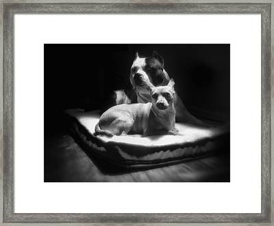 Loving Friends 1 Framed Print by Larry Marshall