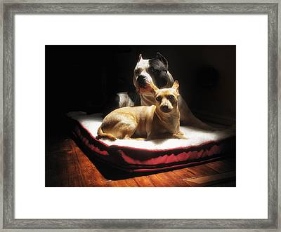 Loving Friends Color Framed Print by Larry Marshall