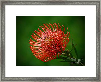 Loving The Color Orange Framed Print by Inspired Nature Photography Fine Art Photography