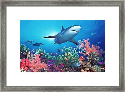 Low Angle View Of A Shark Swimming Framed Print by Panoramic Images
