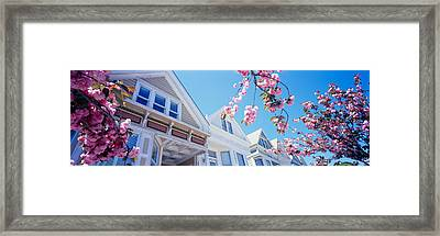 Low Angle View Of Cherry Blossom Framed Print by Panoramic Images