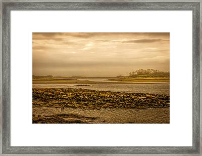 Low Tide Cape Porpoise Maine Framed Print by Bob Orsillo