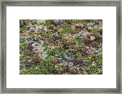 Low Tide, Misool Island, Raja Ampat Framed Print by Jaynes Gallery