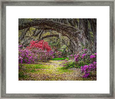Lowcountry Spring Framed Print by Steve DuPree