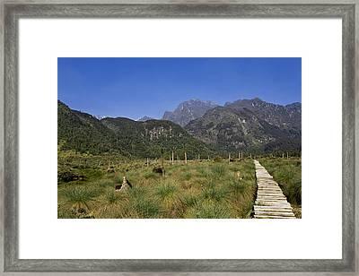 Lower Bigo Bog In The Rwenzori Framed Print by Martin Zwick