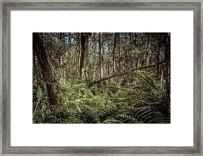 Loxahatchee Refuge-1 Framed Print by Rudy Umans