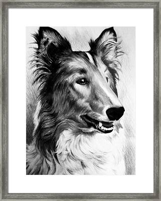 Lucky Framed Print by Andrew Read