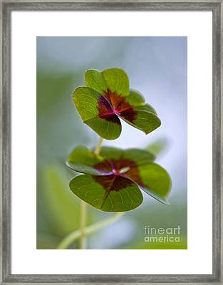 Lucky Lovers Framed Print by Maria Ismanah Schulze-Vorberg