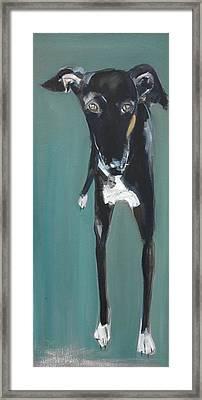 Lula, 2009 Oil On Board Framed Print by Sally Muir