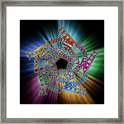 Lumazine Synthase Molecule Framed Print by Laguna Design