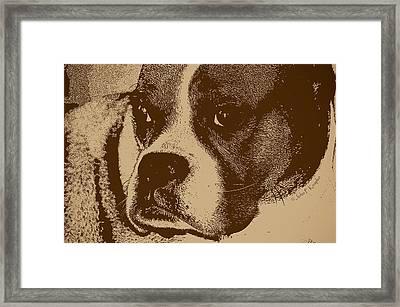 Luna The Boxer  Framed Print by John Knapko