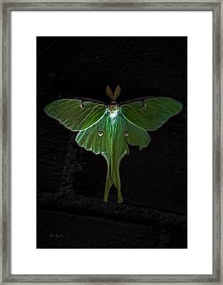 Lunar Moth Framed Print by Bob Orsillo