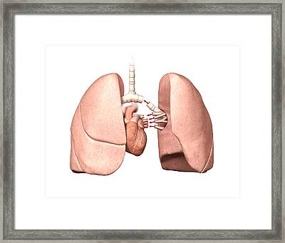 Lung Operation Framed Print by Henning Dalhoff