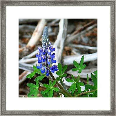 Lupin And Driftwood Framed Print by Art Block Collections