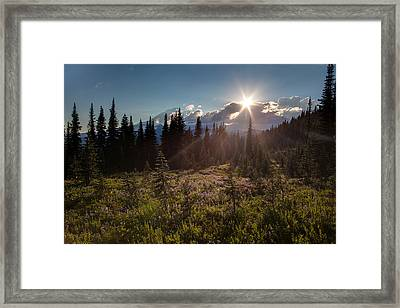 Lupine Field Sunstar Framed Print by Mike Reid