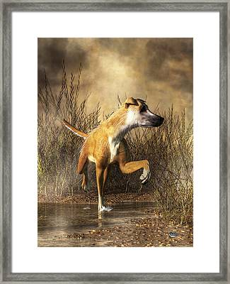 Lurcher Framed Print by Daniel Eskridge