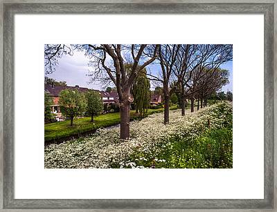 Luscious Spring Bloom In Holland Framed Print by Jenny Rainbow