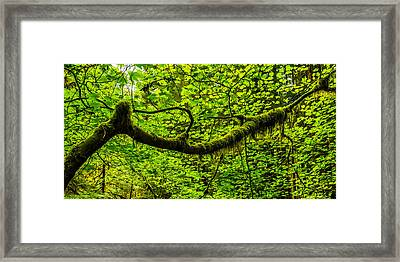 Lush Framed Print by Chad Dutson