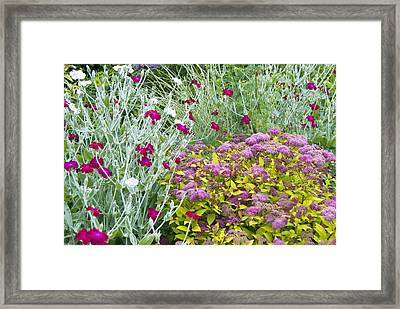 Lychnis Coronaria And Spirea Sp Framed Print by Science Photo Library