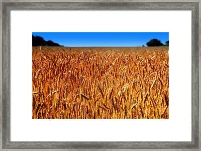 Lying In The Rye Framed Print by Karen Wiles
