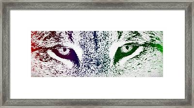 Lynx Eyes Framed Print by Aged Pixel