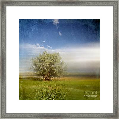 Lyrical Tree - 01bt01aa Framed Print by Variance Collections