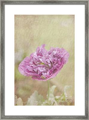 Mabel Framed Print by Elaine Teague